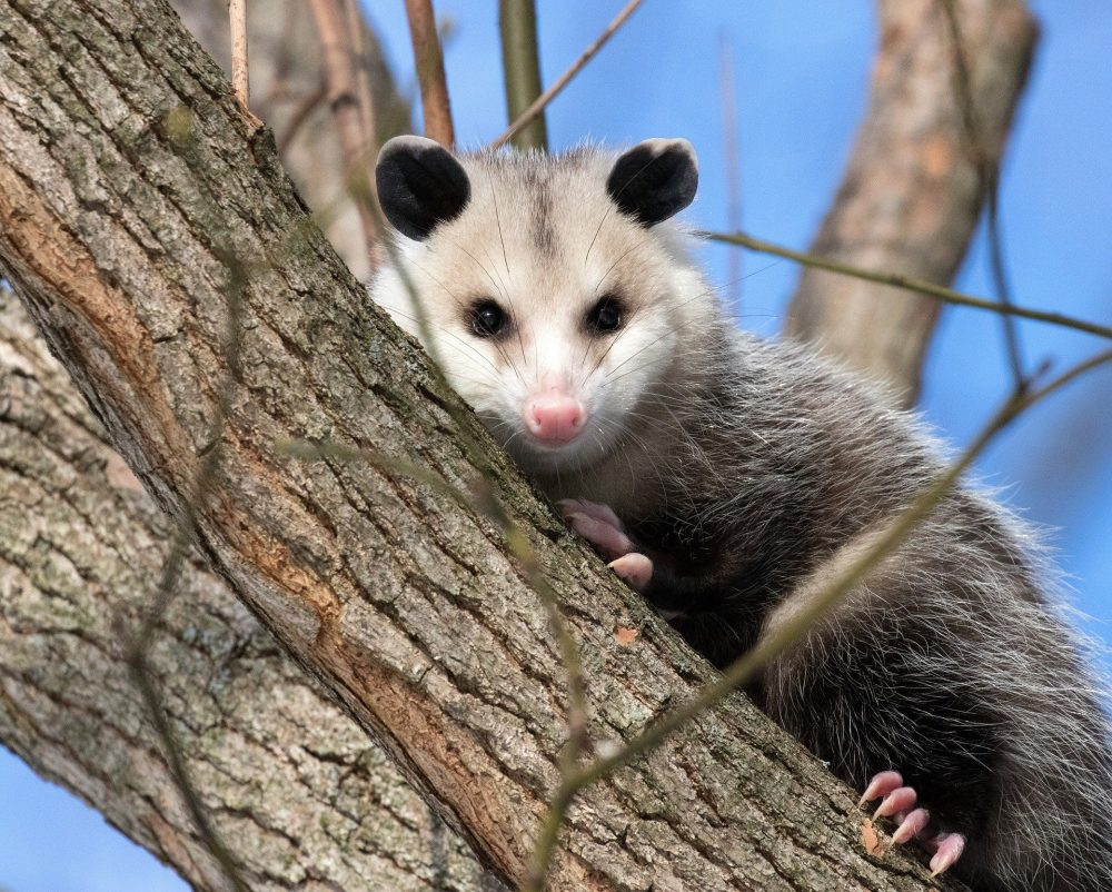 What Possum 2.0 Means for Your Storage Business